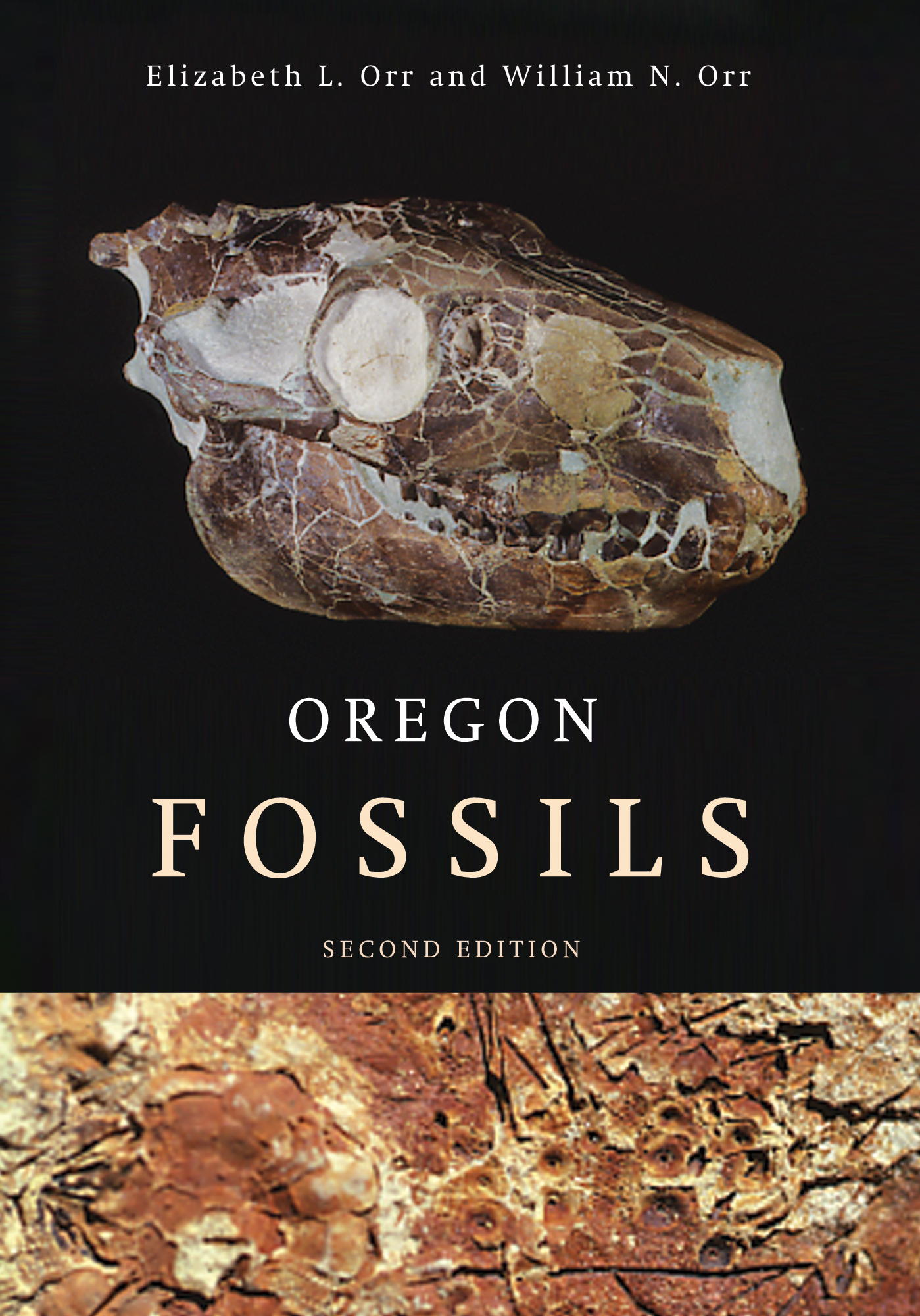 Photo shows the NEW Second Edition of Oregon Fossils, by Elizabeth L. Orr and William N. Orr ISBN 978-0-87071-573-0 a new revised and expanded guide for Oregon fossils - Hot off the Press!  To ensure availibility of this item, order as early as possible. Click here to learn more about the largest selection of Regional Books and Maps for Oregon from FACETS book shelf!